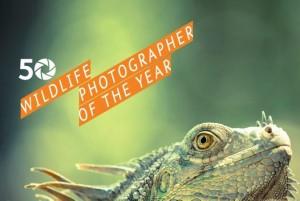 82878_wildlife-photographer-of-the-year-museum-rouen